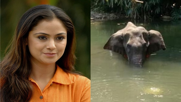 Pregnant Elephant Death: Actress Simran Is Heartbroken With This Inhumane Incident