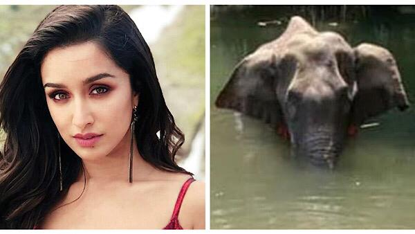 Shraddha Kapoor And Athiya Shetty Express Outrage Over Killing Of Pregnant Elephant With Firecrackers