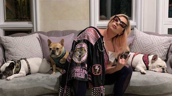 Lady Gaga Offers A $500,000 Reward After Her Dog Walker Was Shot & Two Frenchies Were Stolen